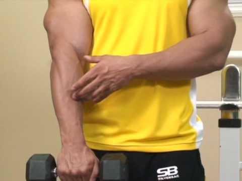 Bodybuilding: Forearm Reverse Dumbbell Curls