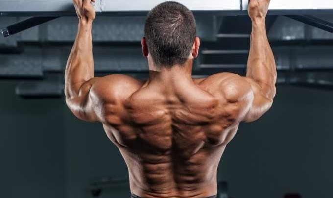 5 Best Back Exercises