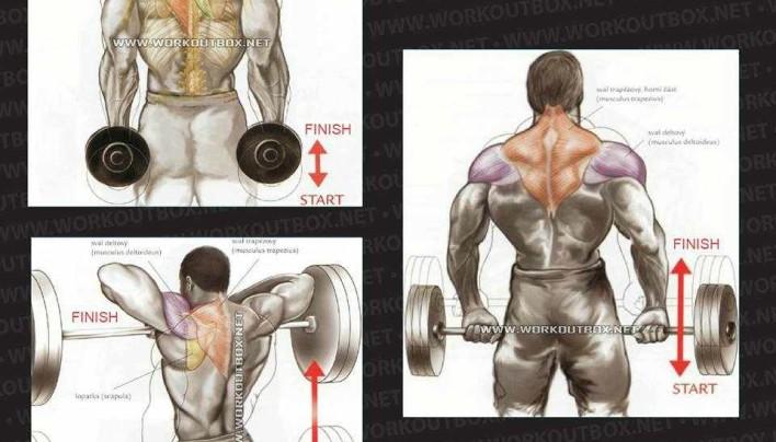 Trap / Neck Workout
