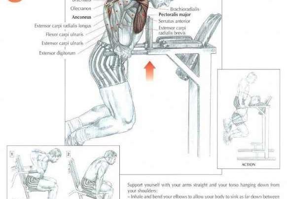 Bar dips Workout