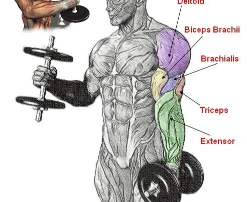 Hammer Curl Workout!