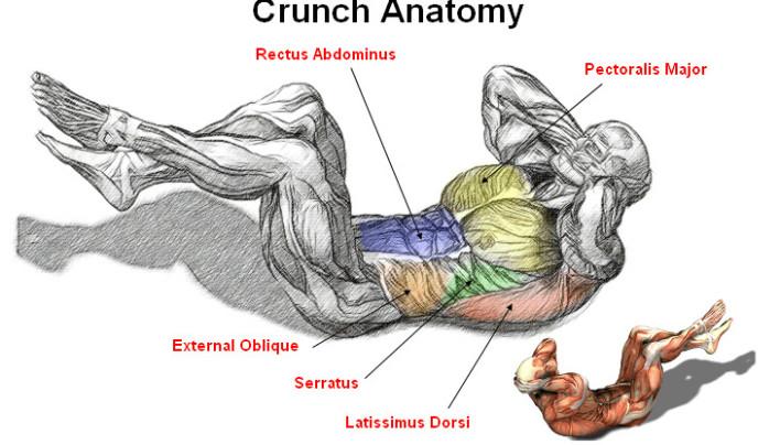 Abs Crunch Anatomy