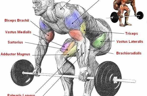 Deadlift Workout Anatomy!