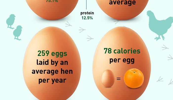 Egg Cellent Facts!