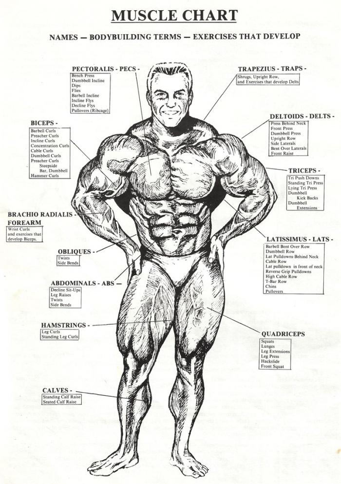 Body muscle chart!