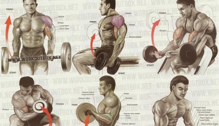 Biceps Workout!