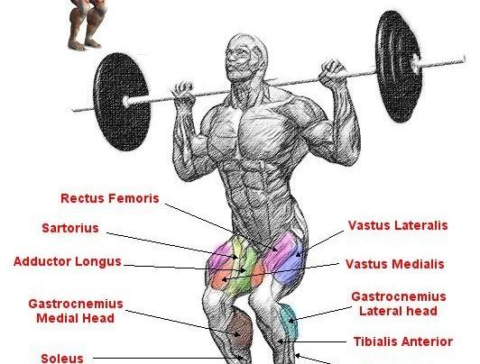 Rear squat anatomy workout!