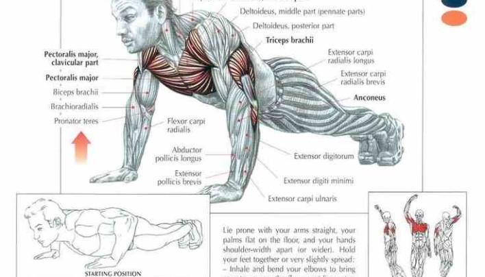 Push ups Workout!