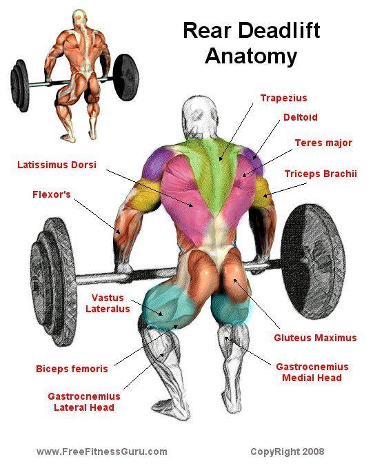 Rear Deadlift Anatomy!