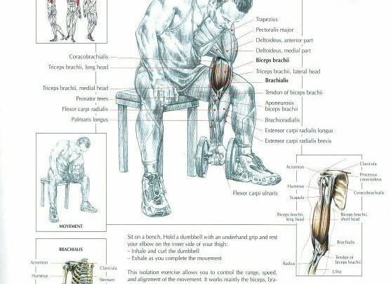 Biceps Concentration Curls Workout!