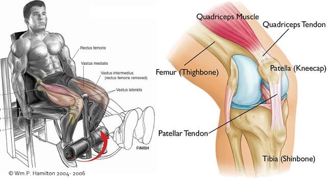 Do Your Knees Hurt? Stop Doing Leg Extensions!