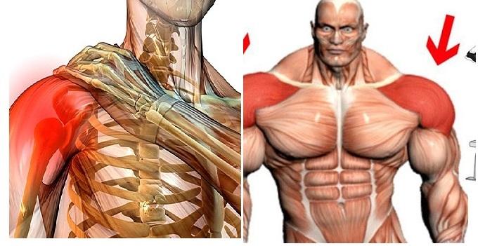 8 Tricks for Bigger, Healthier Shoulders
