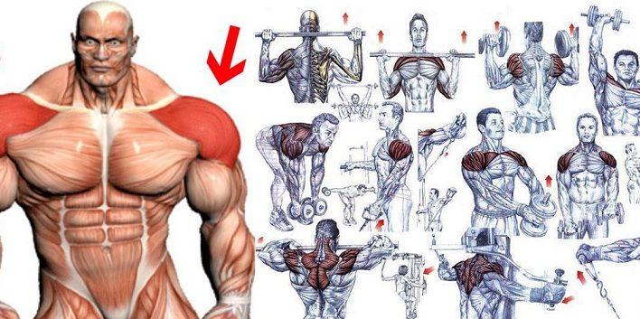 5 Deltoid Muscle Exercises For Maximum Muscle Development