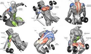 Total Body Dumbbell Training For Athletes